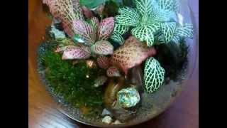 Florarium Silver.wmv(Группа в Контакте: http://vk.com/flora24 Каждому, кто увидел этот растительный мирок, который образуется в условиях..., 2011-11-26T15:22:40.000Z)
