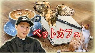 梟【 ペットカフェ 】猫 thumbnail