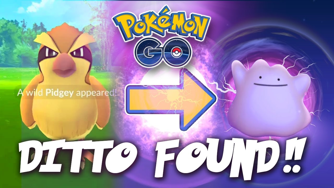ditto transform pormo Pokemon