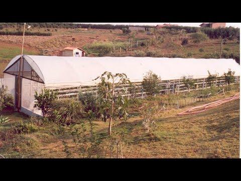Clique e veja o vídeo Como Tornar seu Sítio Lucrativo - Cultivo em Estufas