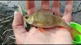 ЧТО С ЭТИМ ОКУНЕМ Рыбалка на реке