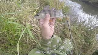 Ловля окуня на удочку осенью на малой реке, видео rybachil.ru