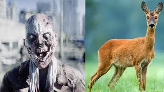 Chronic Wasting Disease (CWD): The Start of a Zombie Apocalypse???