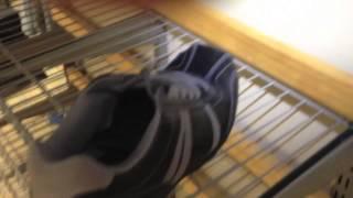 Установить обувную полку(, 2014-10-31T09:10:55.000Z)