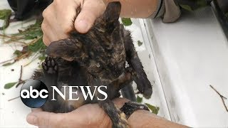 cats rescued from nc floodwaters l hurricane florence animal rescue