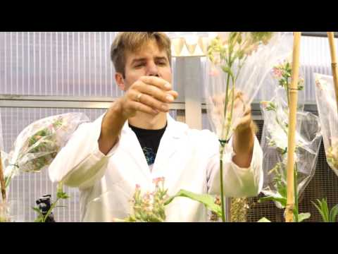 A Second Green Revolution: Tweaking Photosynthesis Boosts Plant Growth