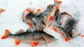 """Глухозимье! ЛОВЛЯ Окуня на ПИКУЛЯ!!! Рыбалка на озере """"Большие Чертаны""""!"""