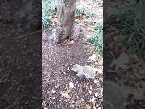 Squirrel at the Washington Square Park