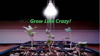 SANSI 40W Daylight LED Plant Light Bulb Full Spectrum Ceramic LED Grow Light