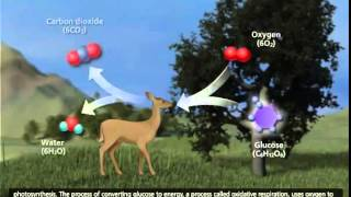 The Carbon Cycle 3D Animation