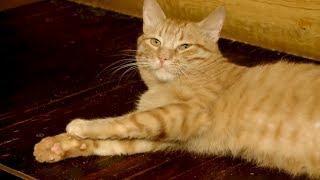 Ищу друга - Котята Стиви и Желток - Как воспитывать котёнка - С добрым утром, малыши!