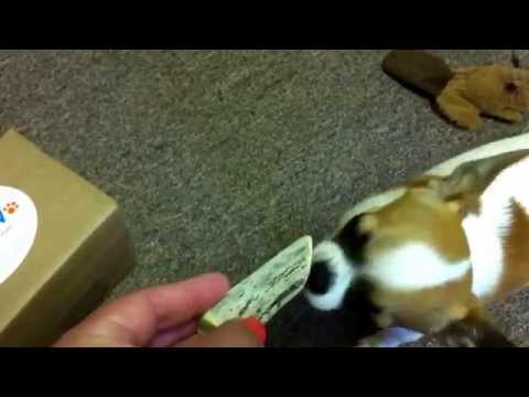 coupaw.com-&-prairie-dog-brand-antlers