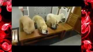 Самые смешные приколы с собаками! Смешные видео собак 2015