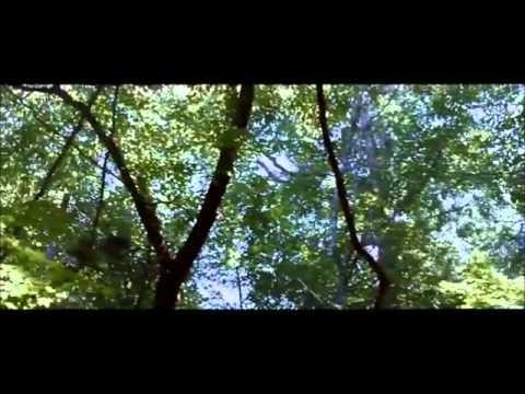 Birdsong Trailer
