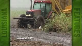 Sugarcane Harvest at Kenny Self