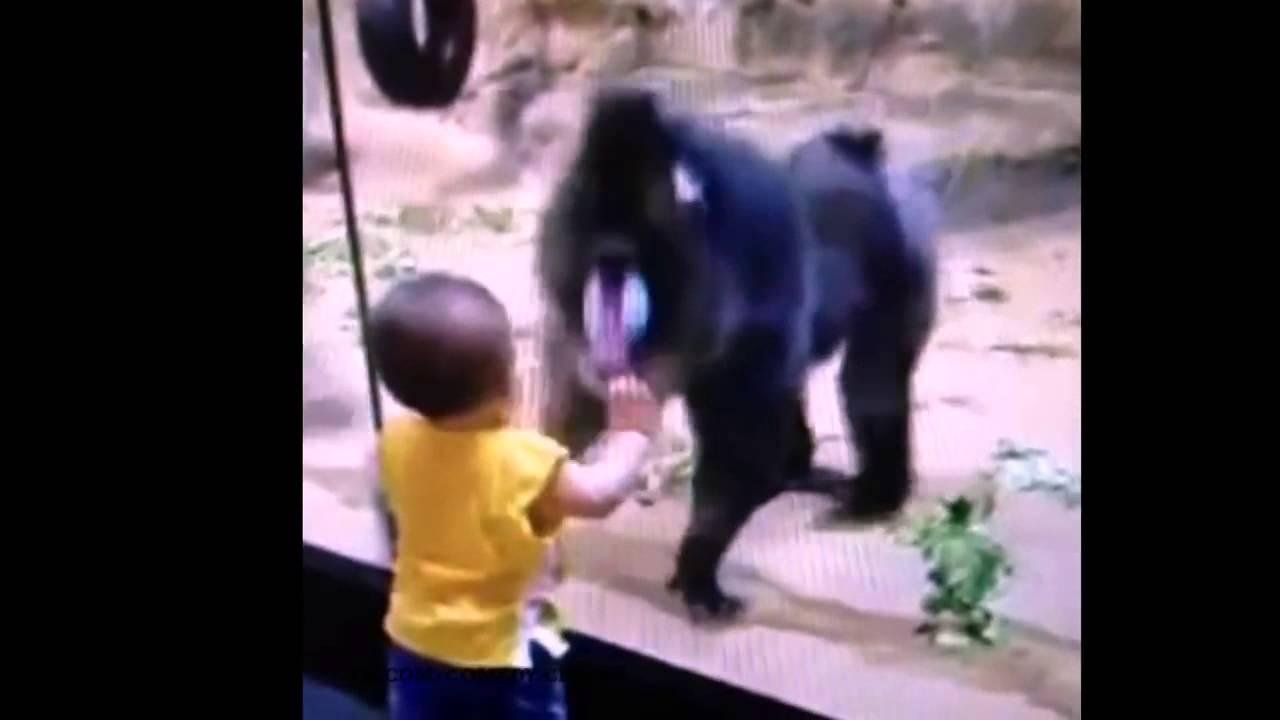 on the glass monkey vine youtube