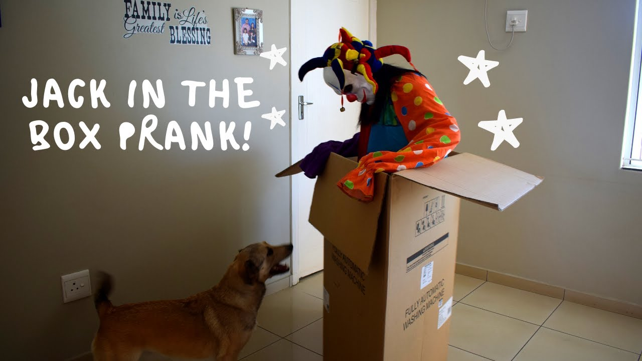 Jack in The Box Prank on My Dogs! FUNNY REACTIONS! Zeus The Greedy Husky
