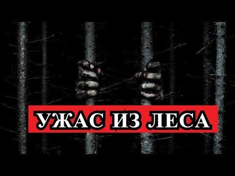 Страшная история - УЖАС ИЗ ЛЕСА