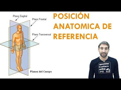 POSICION ANATOMICA DE REFERENCIA - YouTube