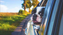 Dog Care Dog Sitter - Home Away From Home 914-265-2008  Larchmont White Plains Greenwich CT