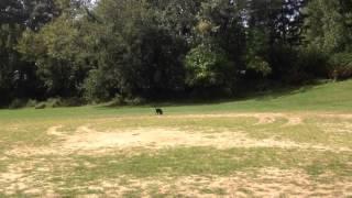 Jax playing fetch