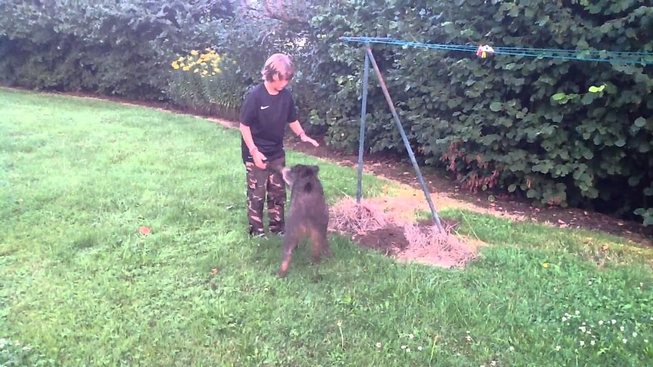 11 ans passionn de chasse il carresse un sanglier sauvage dans son jardin youtube - Nourrir un herisson dans son jardin ...