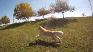 Golden On The Run