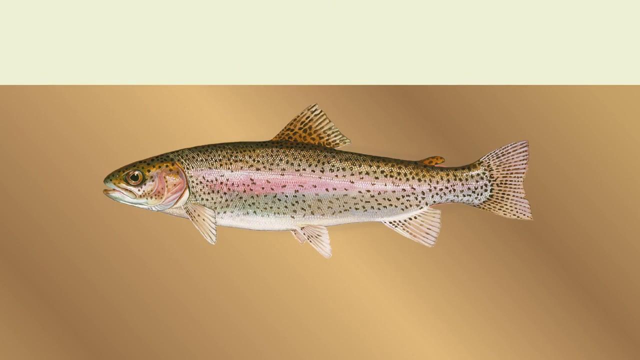 Fish Advisories | OEHHA