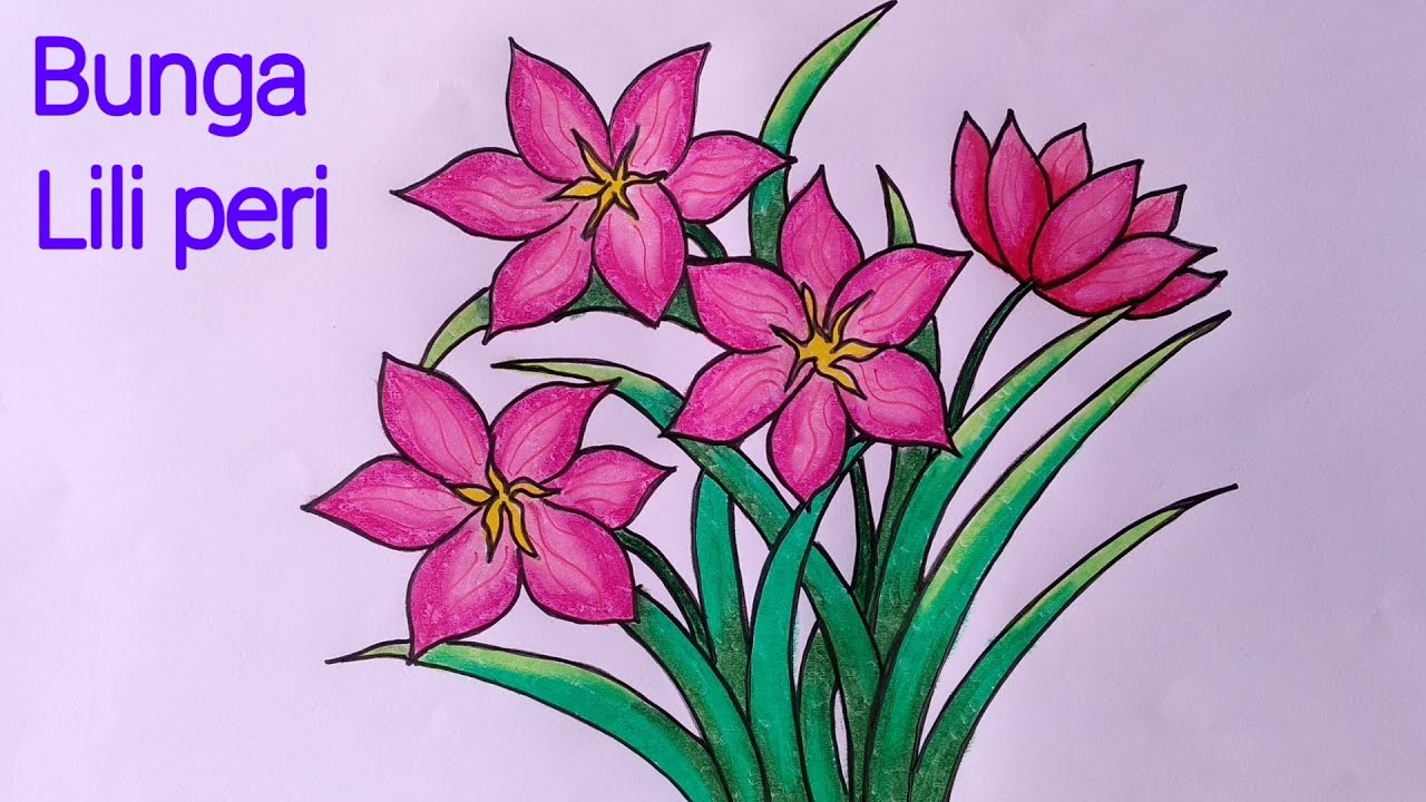 Menggambar Bunga Lili Cara Menggambar Dan Mewarnai Bunga Lili Youtube