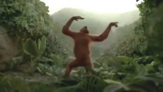 Я просто ржал! Обезьяна танцует лучше всех