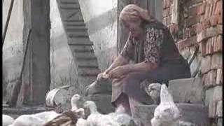 A Baba Feeds the Fowl in Western Ukraine