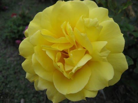 Цветы Азана-Ещё одно чудо Аллаха/miracle of Allah