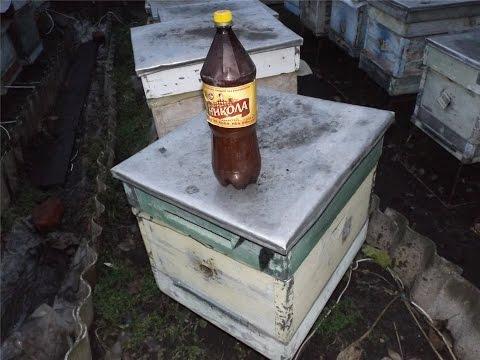 Лечим пчел от клеща варроа с помощью бипина