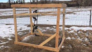Simple Magpie/Bird Trap