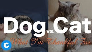 What Dogs Are Grateful For vs. What Cats Are Grateful For | Chewy