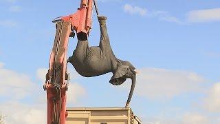 Крупнейшую операцию по переселению слонов проводят в Малави (новости)