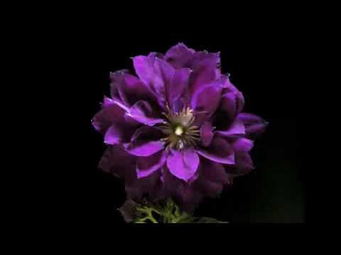 Цветение - Ускоренная съемка!