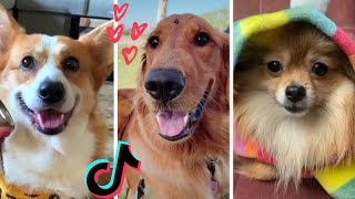 8 Minutes of the Cutest Doggos on Tik Tok ~ Funny Dogs Compilation