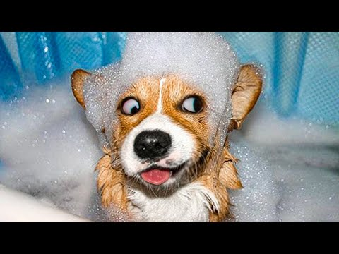 Funniest Animals ? - Awesome Funny Animals' Life Videos ? - Cutest Animals Ever