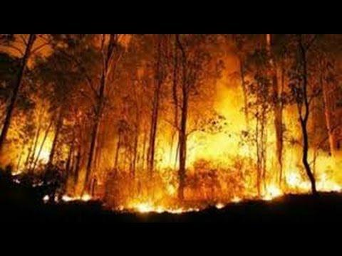Kebakaran Hutan  Riau 2020 Terbaru YouTube