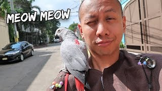 My Talking Parrot Learns to