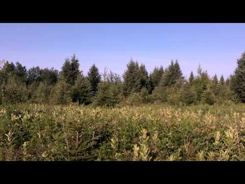 2014 Bear Hound Training 001