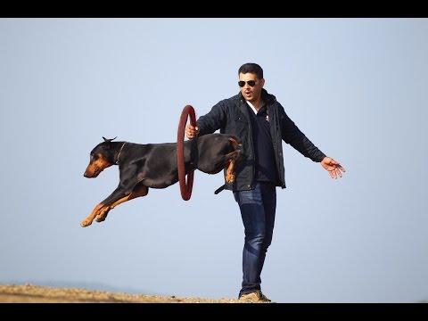 saajan saji cyriac dog training school at pala.kerala 09961310970