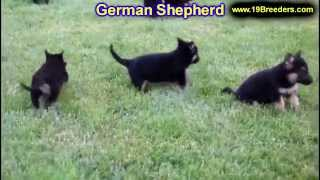 German Shepherd, Puppies, For, Sale, In, Portland, Maine, Me, Brunswick, Waterville, Westbrook, Saco