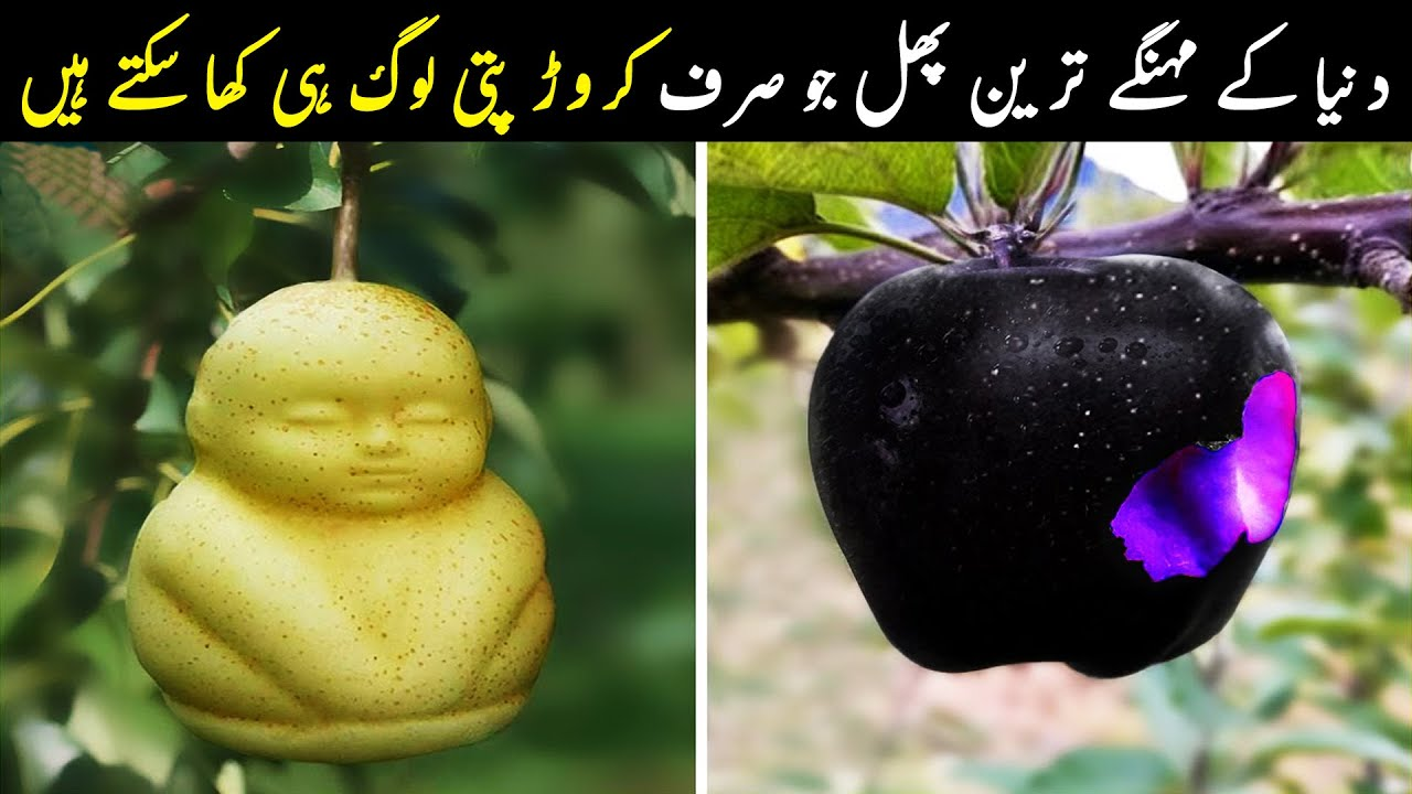 Most Expensive Fruits in the World | Only Billionaires Can Afford | NYKI