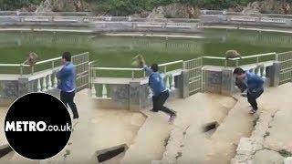 Tourist tries to prank monkey, monkey gets revenge   Metro.co.uk thumbnail