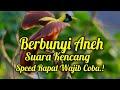 Masteran Ampuh Isian Kasar Speed Rapat Gacor  Mp3 - Mp4 Download