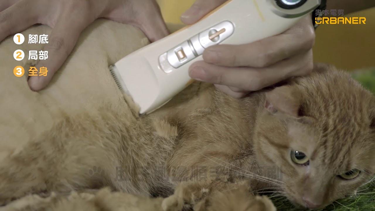 貓咪全身剃毛電剪教學-MB-066 奧本寵物全身用電剪(MB-055升級版)