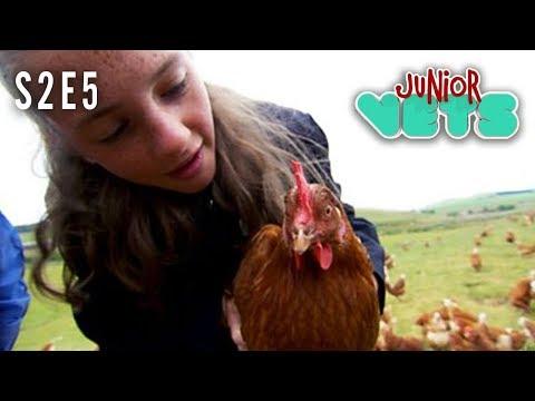 Junior Vets   S2E5