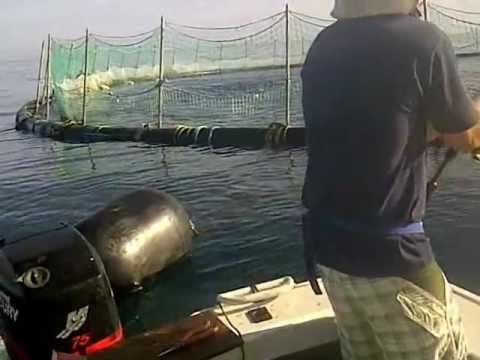 Port Lincoln Tuna Fishing, April 2012